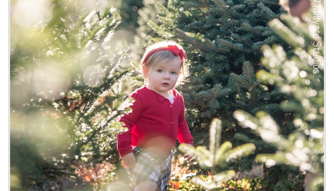 Holiday Photographer NH 1 13